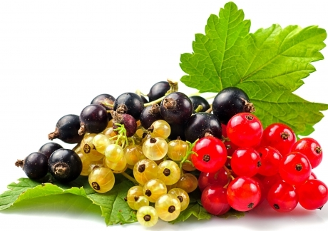 Currants Selection
