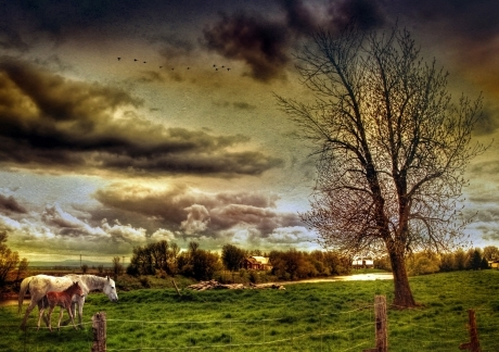 HDR Countryside LandscapE