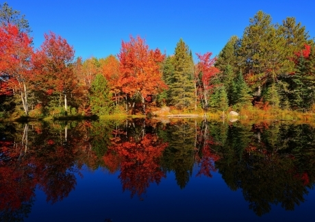 Colourful Forest Reflection
