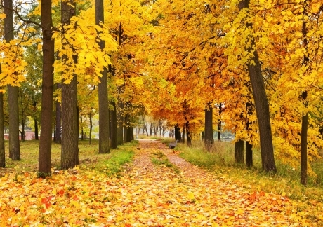 Yellow Forest Landscape